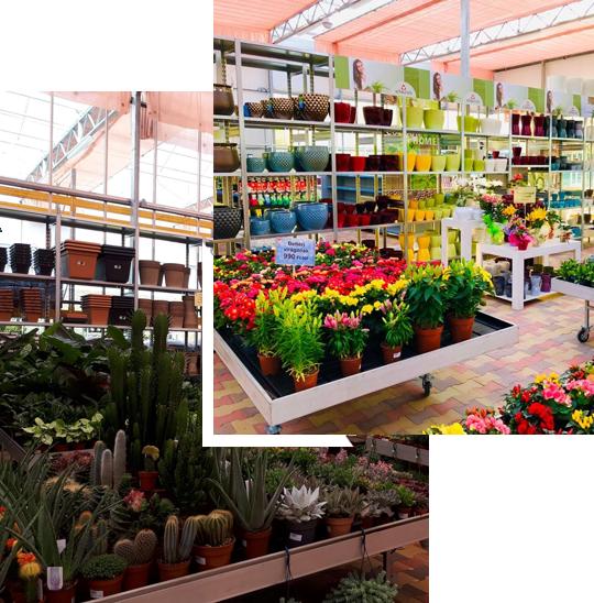 Oázis kertészet Miskolc áruház